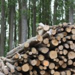 Difference Between Biomass and Biofuel