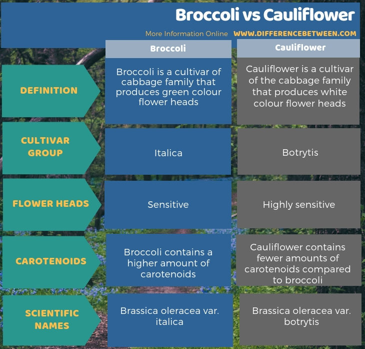 Difference Between Broccoli and Cauliflower - Tabular Form