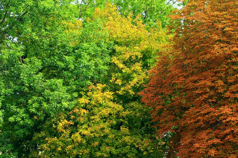 Difference Between Deciduous and Evergreen Trees