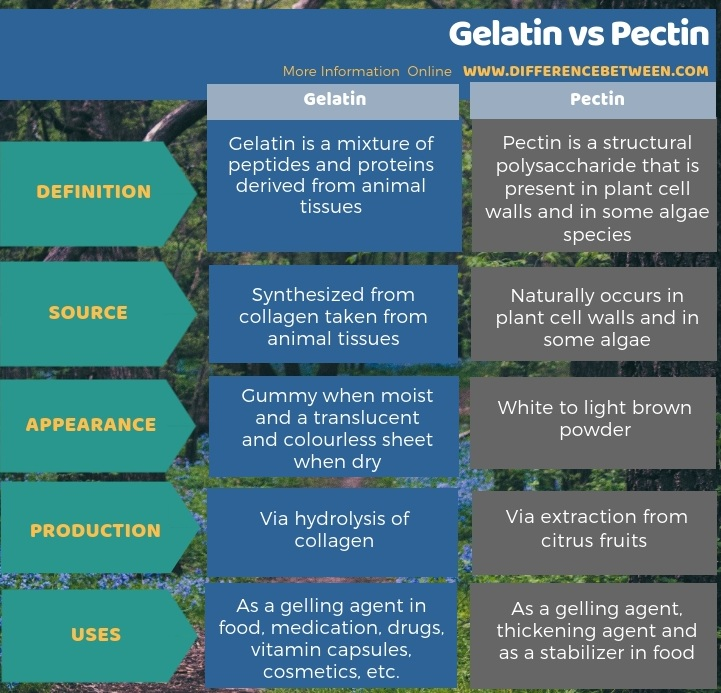 Difference Between Gelatin and Pectin - Tabular Form