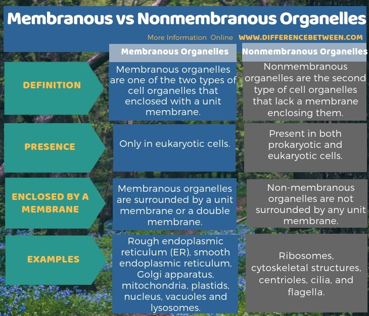 Difference Between Membranous and Nonmembranous Organelles in Tabular Form