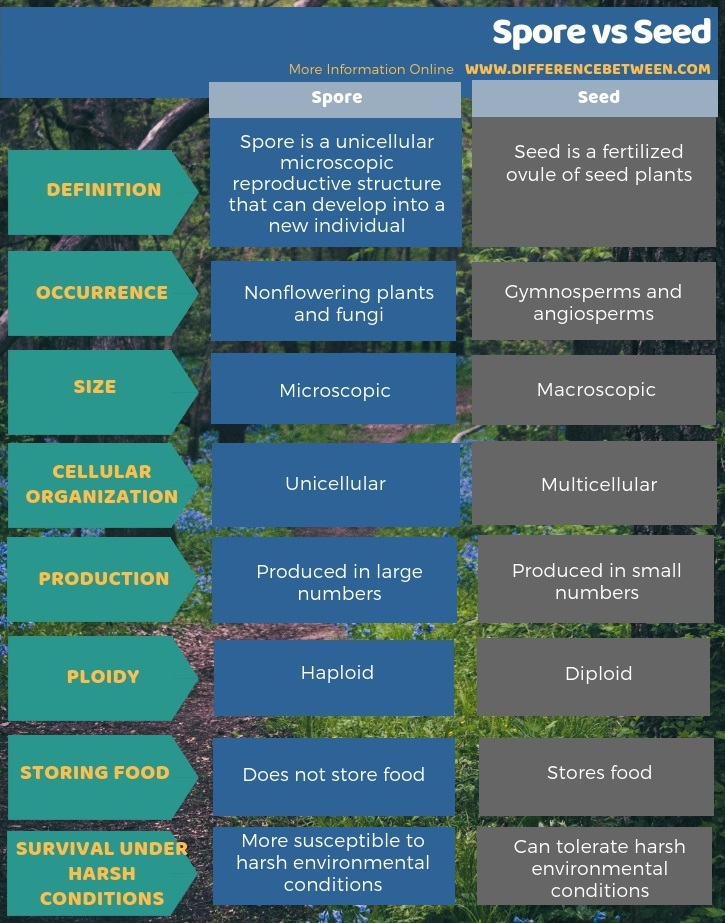 Difference Between Spore and Seed in Tabular Form