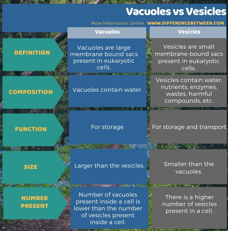 Vacuoles in mammals - PubMed Central (PMC)