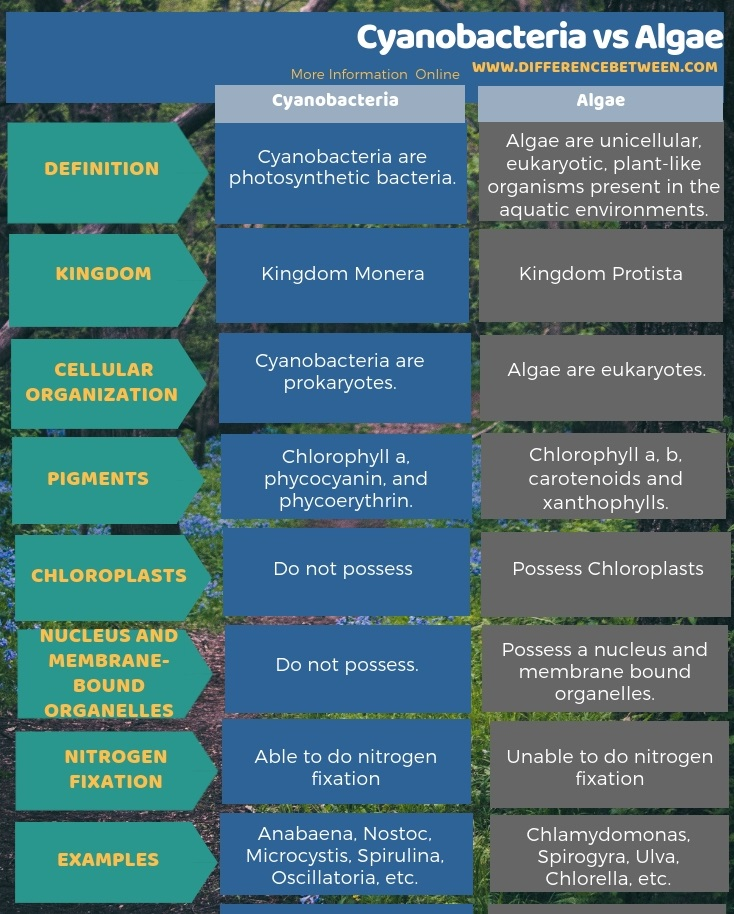 Difference Between Cyanobacteria and Algae in Tabular Form