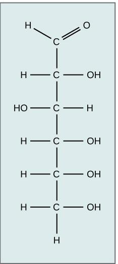 Key Difference - Sucrose vs Glucose