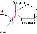 Difference Between Sucrose and Lactose