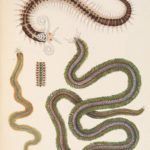 Difference Between Nematodes and Annelids