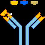Difference Between Antigen and Pathogen