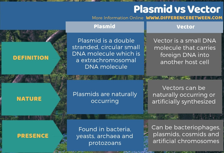 Difference Between Plasmid and Vector in Tabular Form