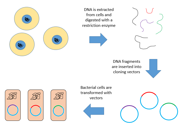 Difference Between Plasmid and Vector