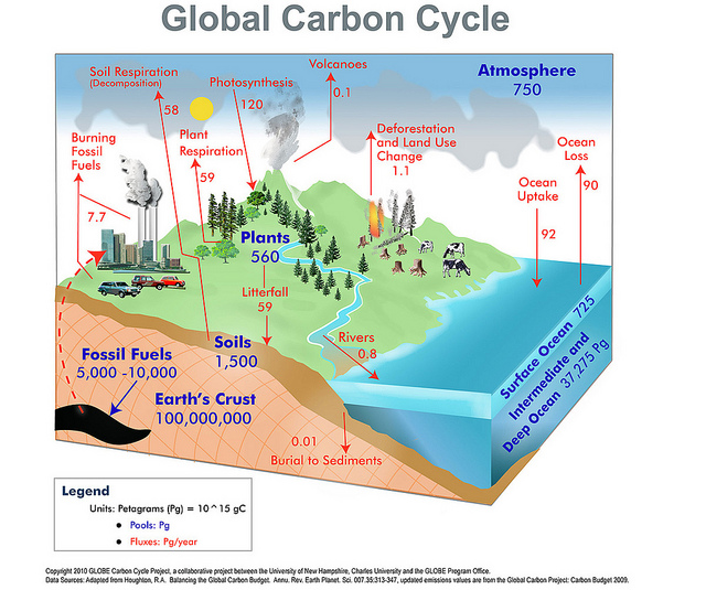 Key Difference Between Nitrogen Cycle and Carbon Cycle
