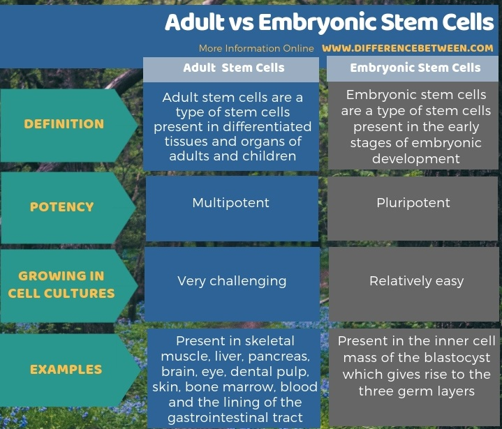 Difference Between Adult and Embryonic Stem Cells - Tabular Form