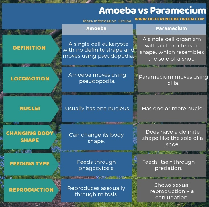 Difference Between Amoeba and Paramecium in Tabular Form