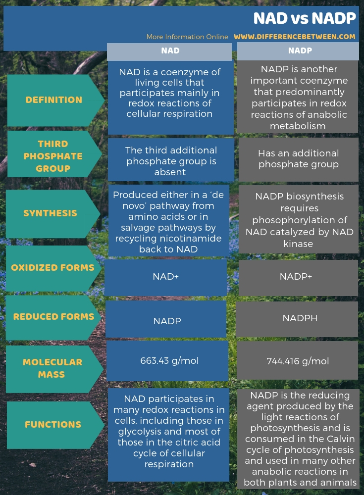 Difference Between NAD and NADP in Tabular Form