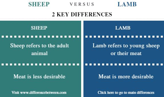 Difference Between Sheep and Lamb - Comparison Summary