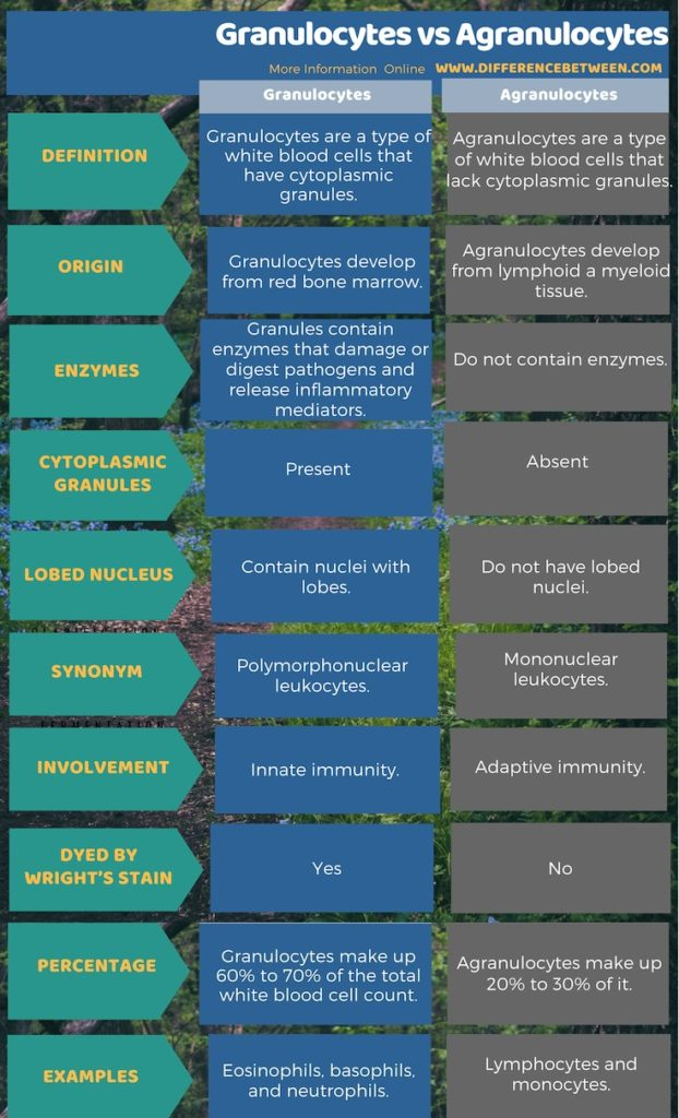 what is the difference between granulocytes and agranulocytes
