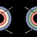 Difference Between Diploblastic and Triploblastic
