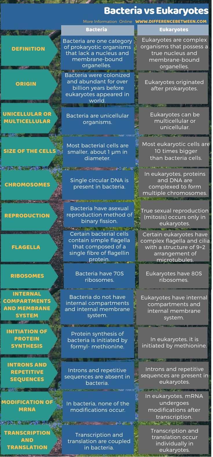 Difference Between Bacteria and Eukaryotes in Tabular Form
