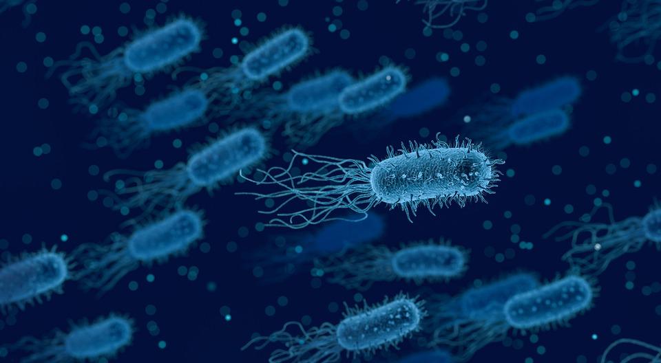 Key Difference Between Bacteria and Eukaryotes