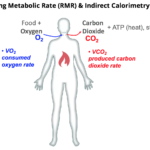 Difference Between Metabolism and Metabolic Rate