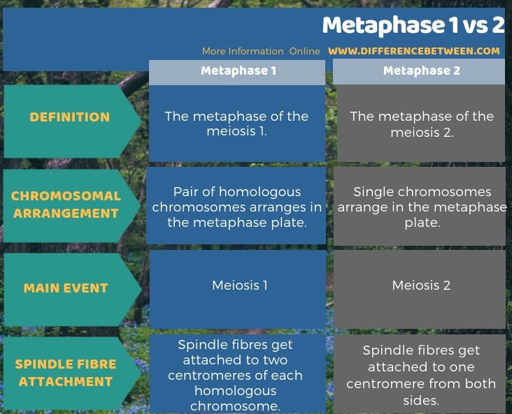 Difference Between Metaphase 1 and 2 in Tabular Form