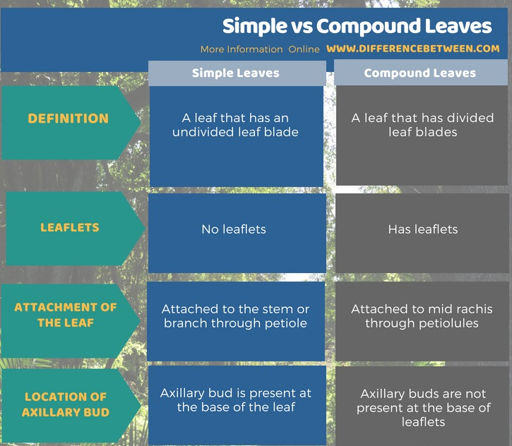 Difference Between Simple and Compound Leaves in Tabular Form