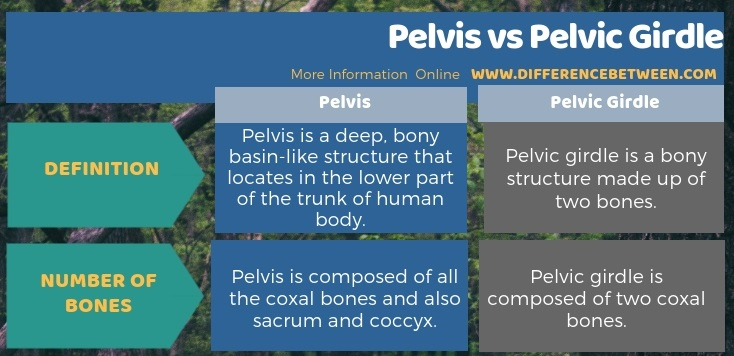 Difference Between Pelvis and Pelvic Girdle in Tabular Form