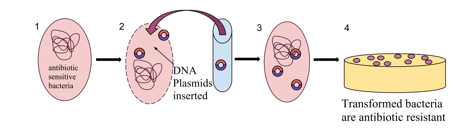 Difference Between Transformation and Transduction