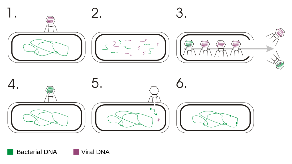 Key Difference -Transformation vs Transduction