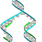 Difference Between Prokaryotic and Eukaryotic DNA Replication