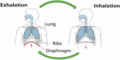 difference between inhalation and exhalation inhalation vs exhalation rh differencebetween com