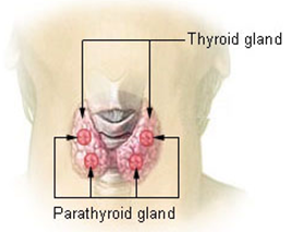 Difference Between Thyroid