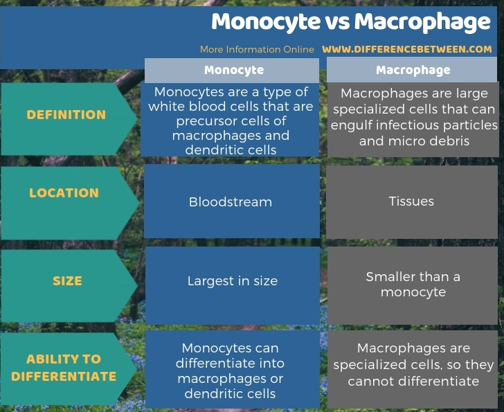 Difference Between Monocyte and Macrophage - Tabular Form