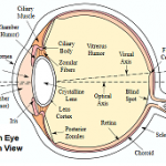 Difference Between Cataract and Glaucoma
