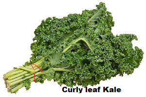 Kale | Borecole | Difference Between