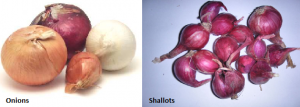 Difference Between Onions and Shallots