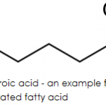 Difference Between Saturated and Unsaturated Fatty Acids