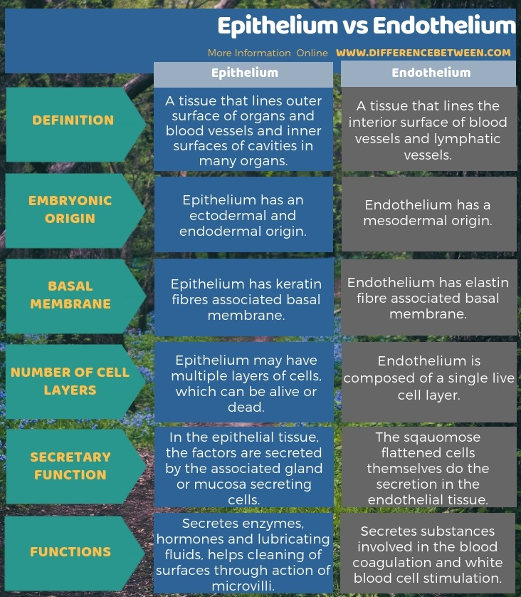 Difference Between Epithelium and Endothelium in Tabular Form