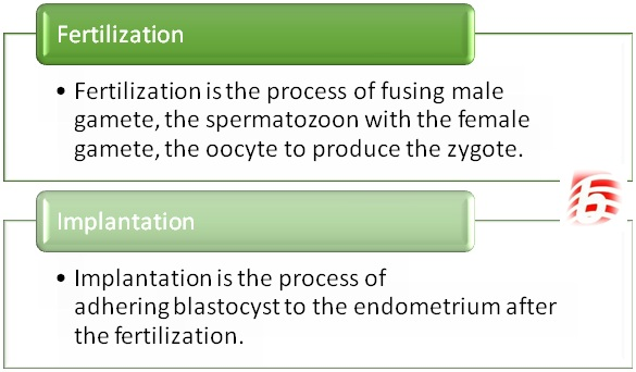 Difference Between Fertilization and Implantation