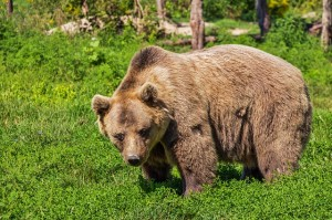 Difference Between Bear and Bare