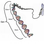 Difference Between Gene and Trait