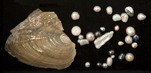 Freshwater vs Cultured Pearls