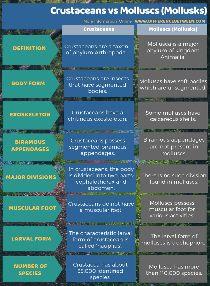 Difference Between Crustaceans and Molluscs (Mollusks) in Tabular Form