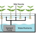 Difference Between Hydroponics and Aeroponics
