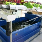 Difference Between Hydroponics and Aquaponics