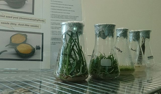 Difference Between Micropropagation and Tissue Culture