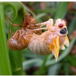 Difference Between Molting and Metamorphosis