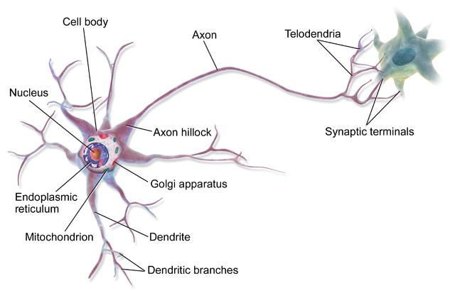 Stem Cells vs Normal Cells