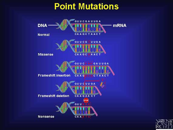 Difference Between Genetic Variation And Natural Selection