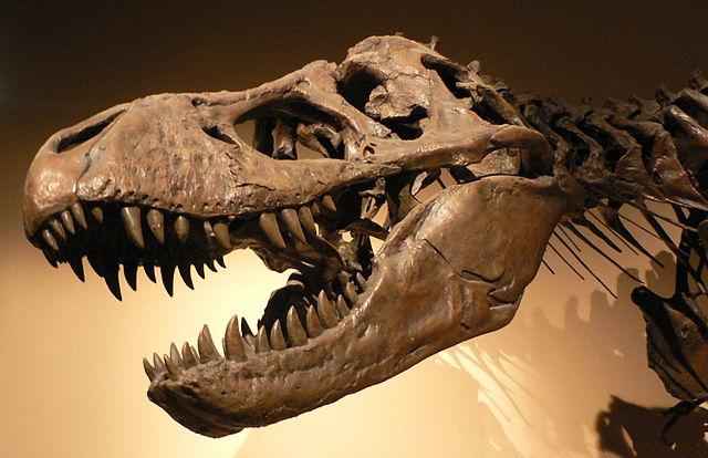 Artifact vs Fossil